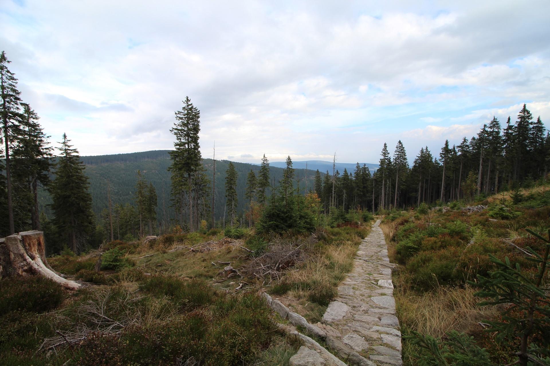 Z Janskych Lazni na Černou horu
